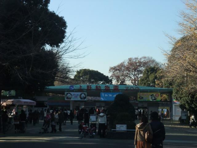 上野動物園でパンダ見てきました。