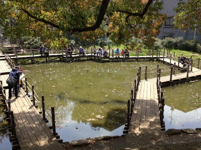 生暖かい春の池の黒い帯状の物体